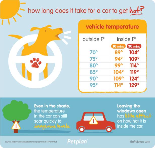 dog-heatstroke-hot-car-summer-dog-safety-dog-overheat